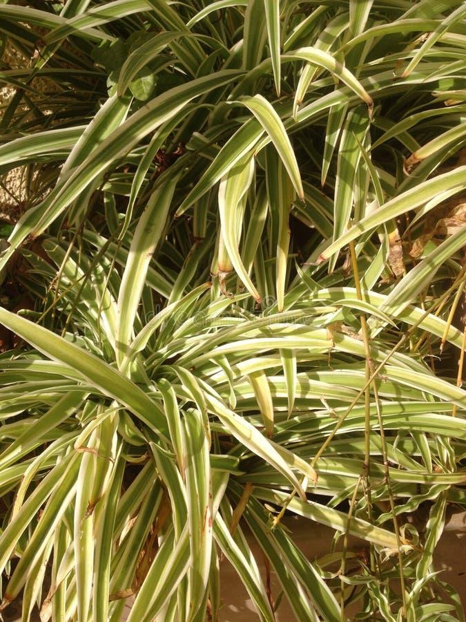 Белое зеленое растение в саде стоковая фотография