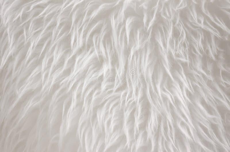 Белое мех стоковое фото rf