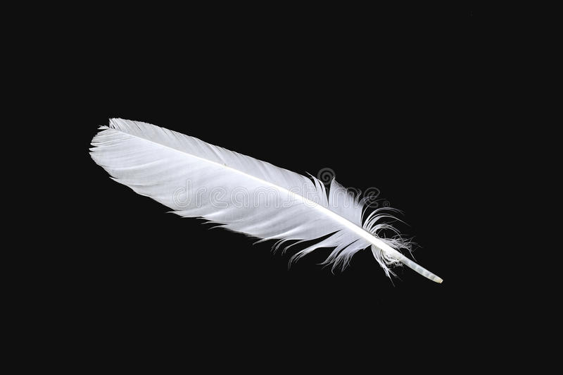 Белое перо птицы стоковая фотография rf