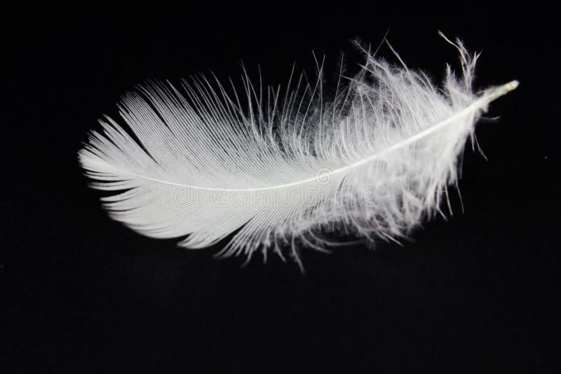Белое перо стоковое фото