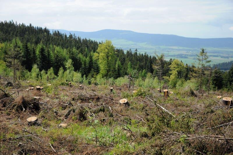 Бедствие в лесе стоковая фотография rf