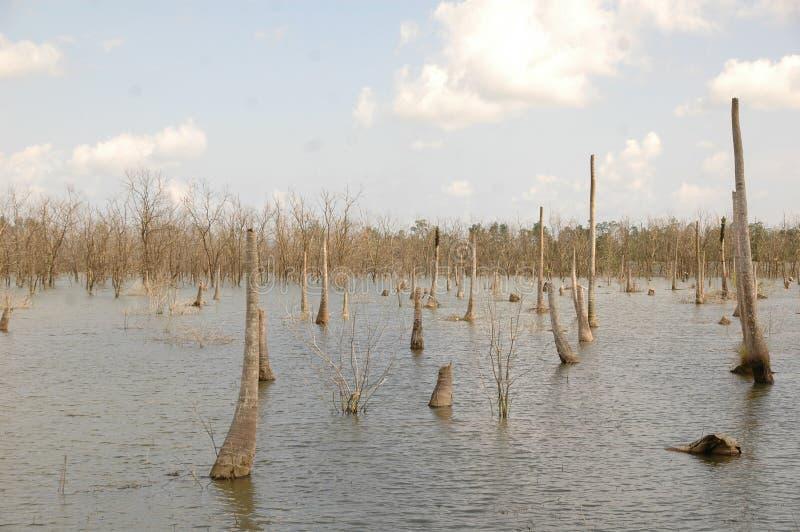 Бедствие цунами стоковая фотография rf