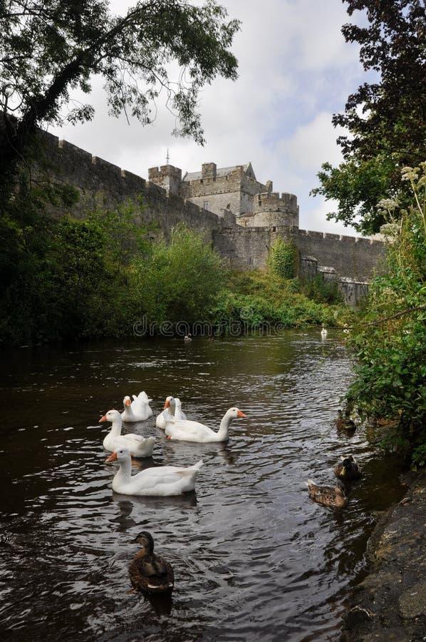 Download Белые лебеди около замка Cahir, Ирландии Стоковое Фото - изображение насчитывающей бело, замок: 40575334
