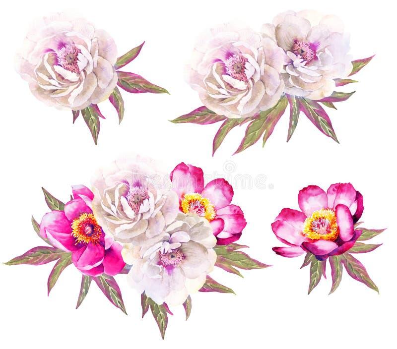 Белые и красные иллюстрации акварели цветка пионов иллюстрация штока