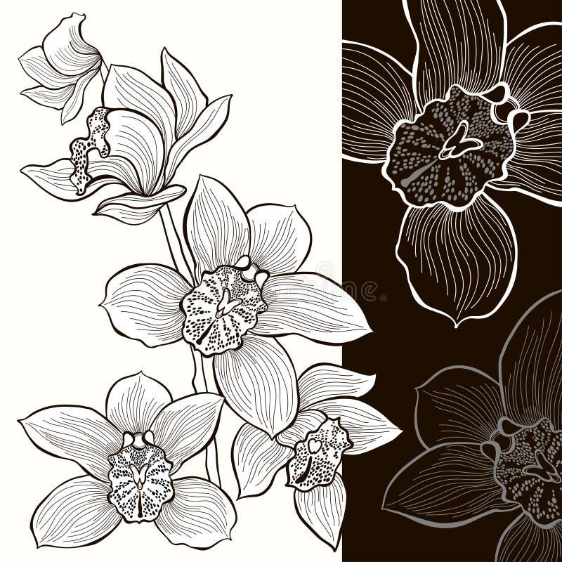 Download Белые и черные орхидеи иллюстрация штока. иллюстрации насчитывающей природа - 37925096