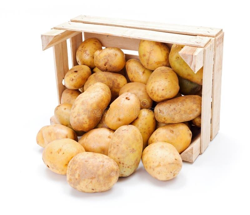 Белые картошки в деревянной клети стоковые изображения rf