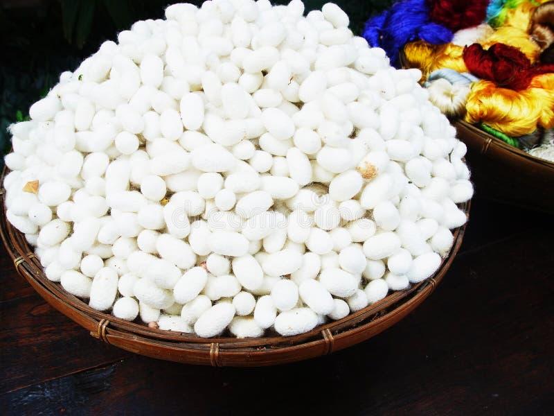 Белые коконы стоковая фотография rf