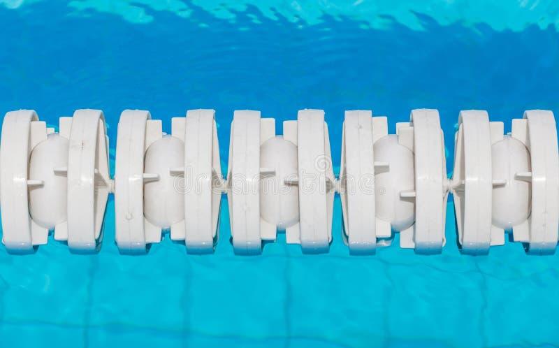 Белые маркированные майны плавают в бассейн стоковые фотографии rf
