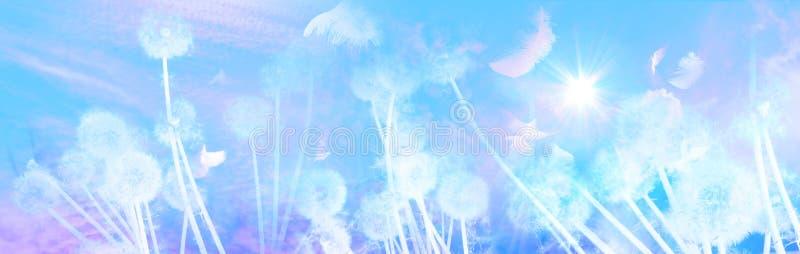 Белые одуванчики с восходом солнца птиц стоковое изображение rf