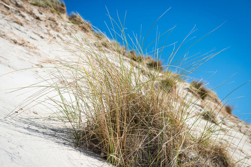Белые песчанные дюны, высокорослая трава и голубое небо стоковое изображение rf