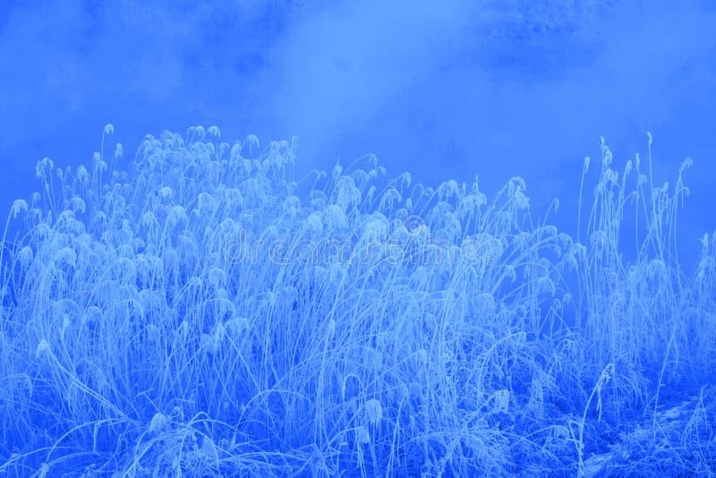 Белые тростники стоковое фото rf