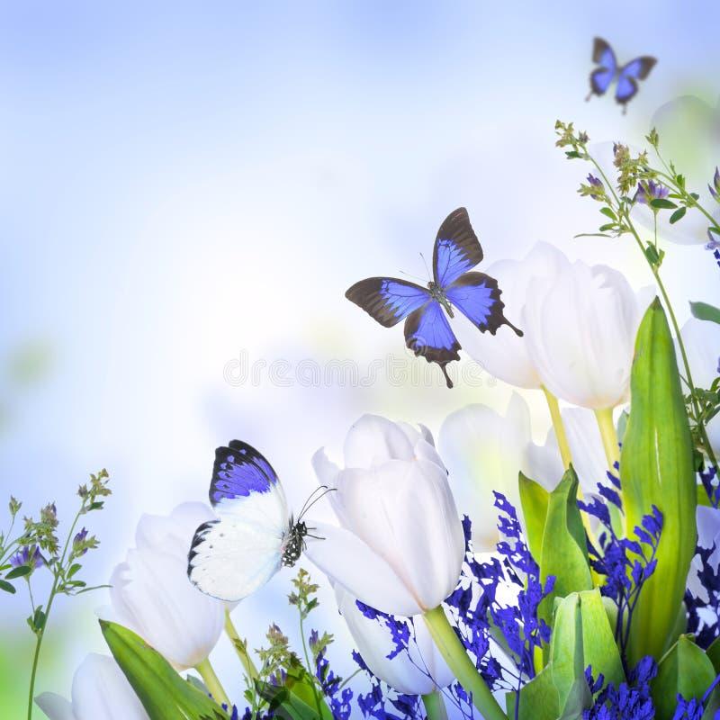 Белые тюльпаны с голубыми травой и бабочкой бесплатная иллюстрация