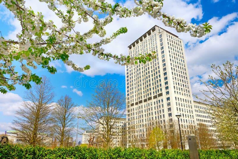 Белые цветения Сакуры перед раковиной размещают штаб в Лондоне, стоковое фото