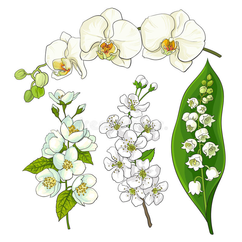 Белые цветки - ландыш, орхидея, яблоко, вишневый цвет иллюстрация вектора