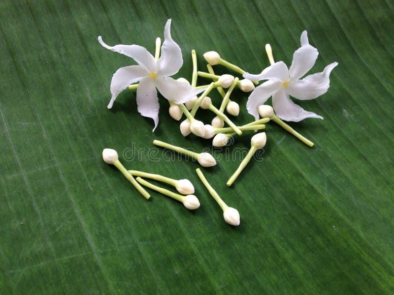 Белые цветки и зеленая предпосылка стоковые изображения rf