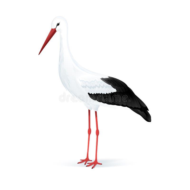 Белый аист бесплатная иллюстрация