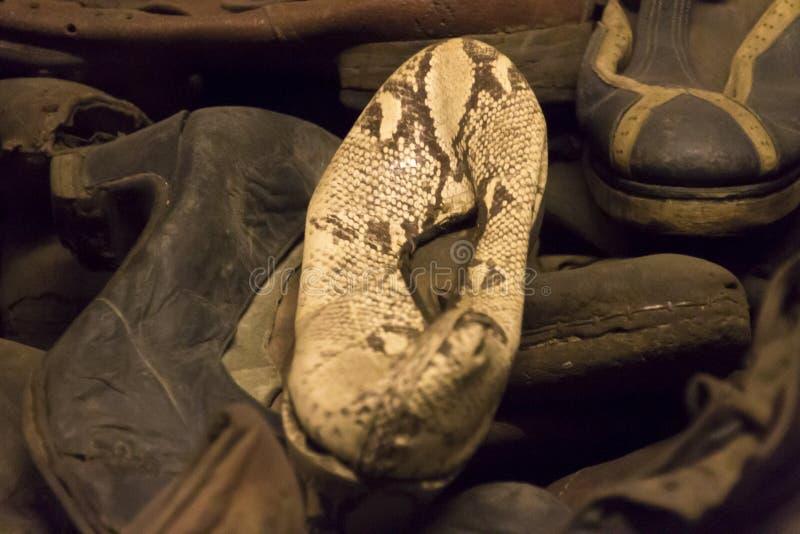 Белый ботинок кожи змейки кто-нибудь убитого в Освенциме стоковое фото rf