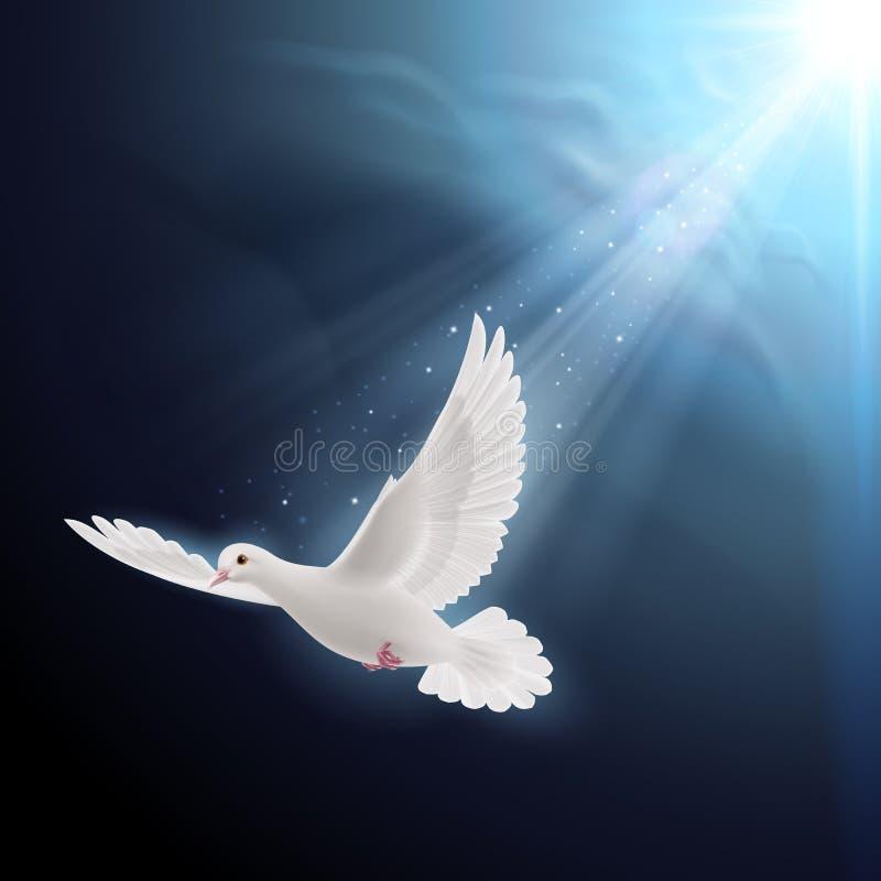Белый голубь в солнечном свете иллюстрация штока