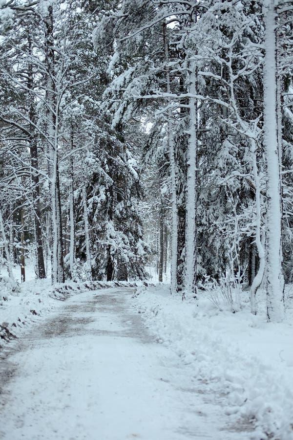Белый лес стоковая фотография