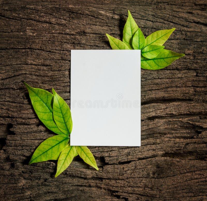 Белый лист чистого листа бумаги с свежими листьями зеленого цвета весны граничит fr стоковые изображения rf