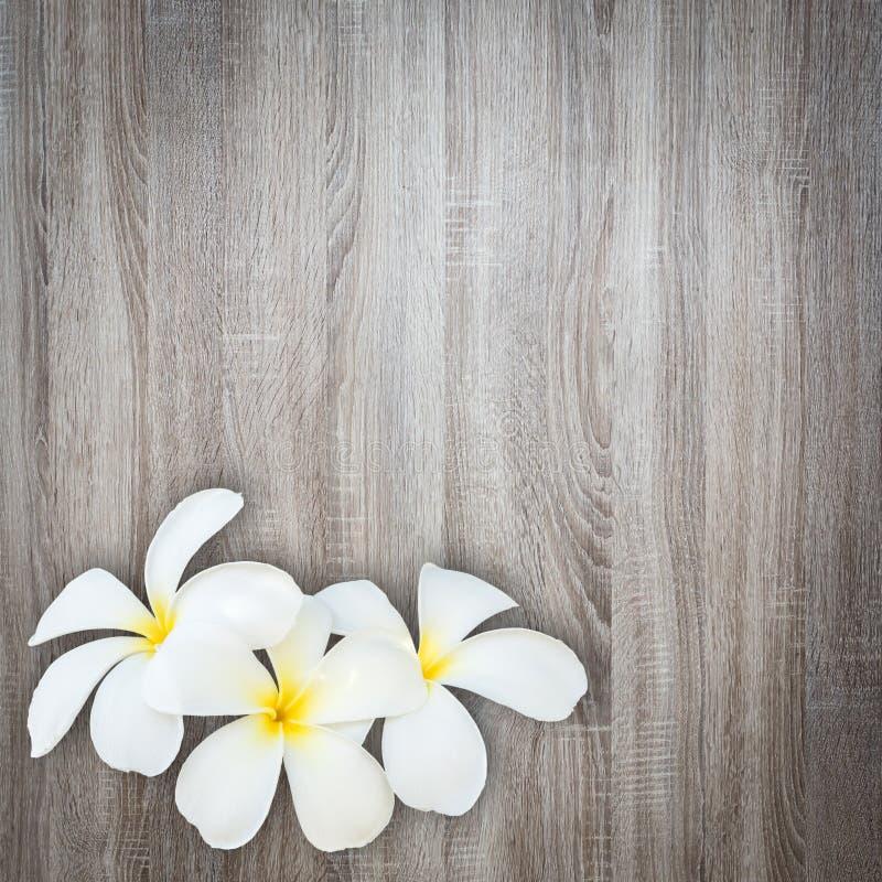 Белый и желтый цветок frangipani на деревянной предпосылке стоковая фотография rf