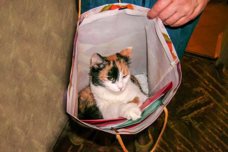 Белый и черный кот в сумке стоковые изображения rf