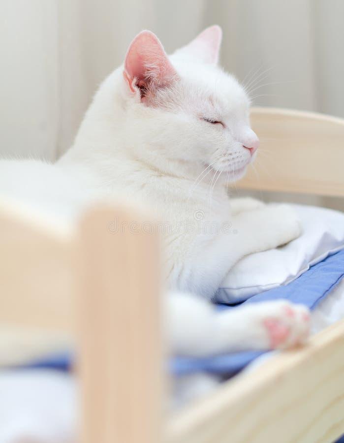Белый кот в кровати