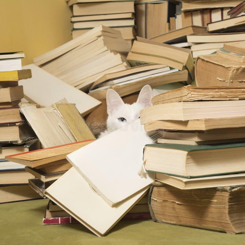 Белый кот при iridis heterochromia peeking за кучей книг стоковые фотографии rf