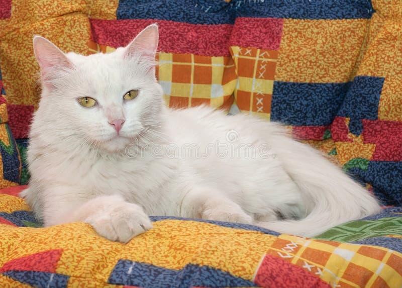 Download Белый кот с желтым цветом наблюдает лежать на Motley Стоковое Фото - изображение насчитывающей любимчики, angoras: 40580996