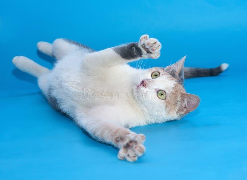 Download Белый кот с играми заплат упал на синь Стоковое Изображение - изображение насчитывающей bluets, любимчики: 40581001