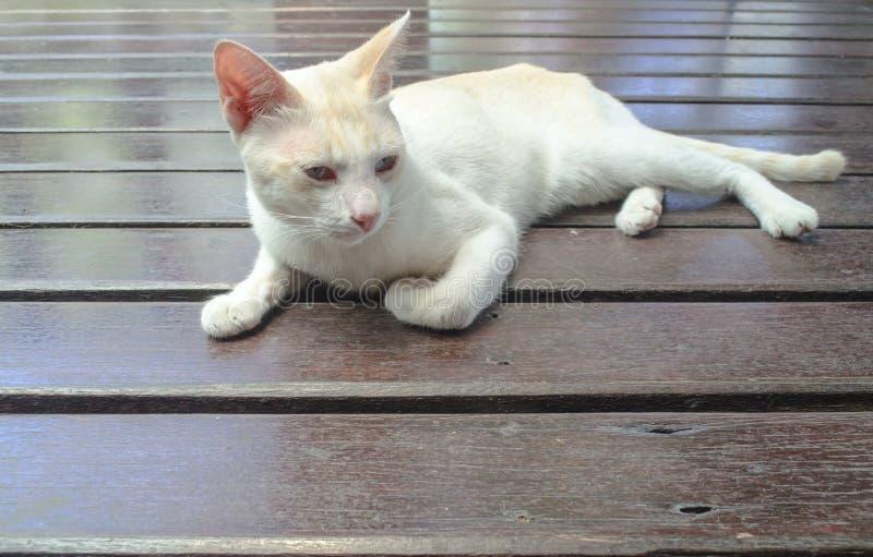 Белый кот думая или смотря но возможно оно ` s имеет спать стоковая фотография rf