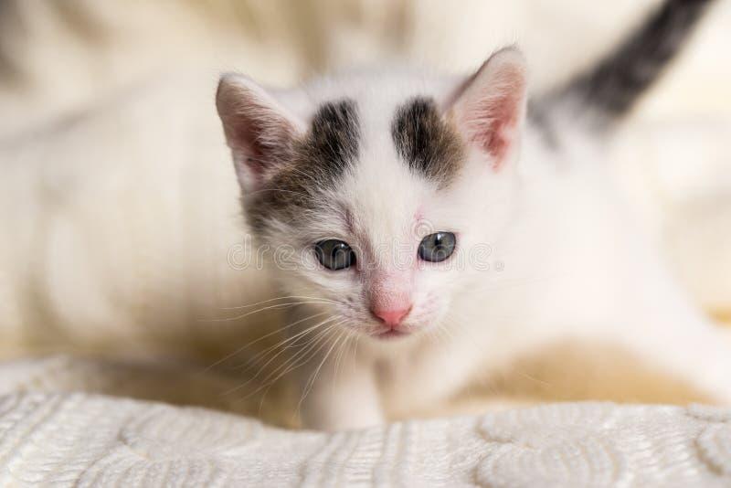 Белый малый котенок с 2 темными пятнами на голове стоковое фото