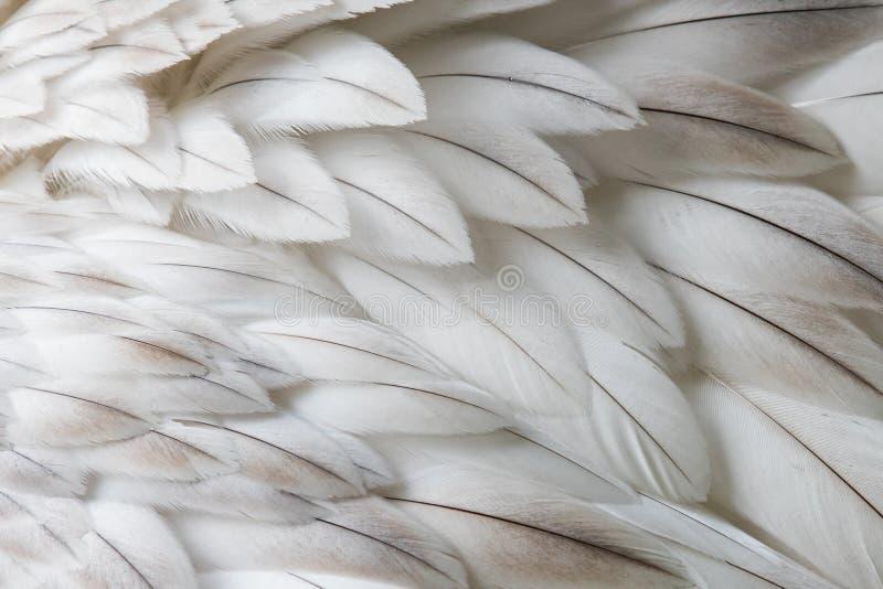Белый пушистый крупный план пера стоковые изображения