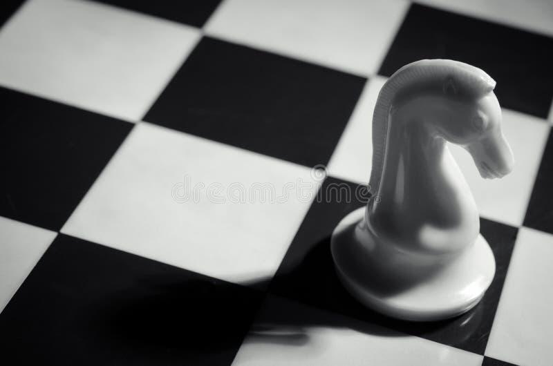 Белый рыцарь шахмат стоковое изображение