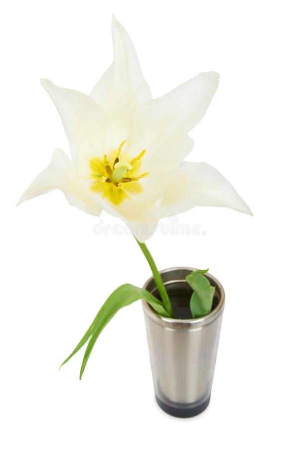 Download Белый тюльпан стоковое изображение. изображение насчитывающей красивейшее - 40575987