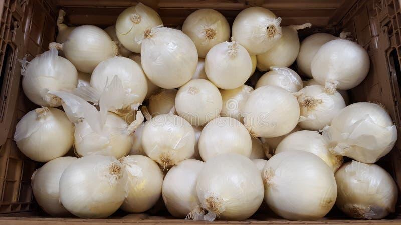 Белый лук на рынке стоковое изображение rf