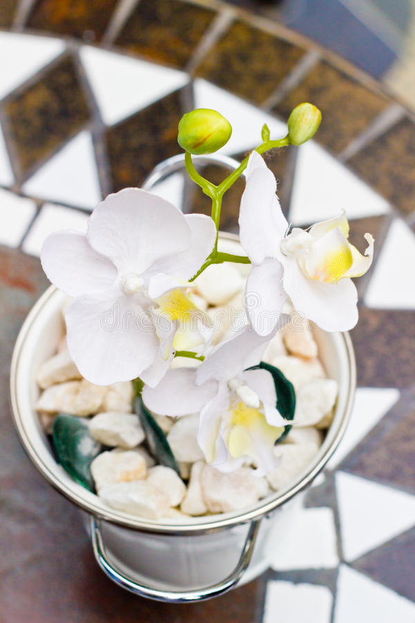Download Белый фаленопсис орхидеи с цветками Стоковое Фото - изображение насчитывающей терраса, таблица: 41651156