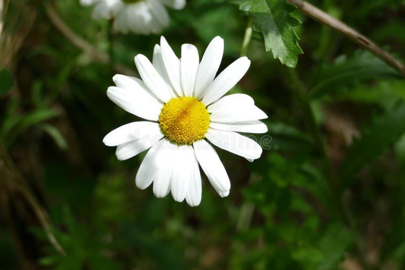 Белый цветок в кровати цветков стоковое изображение
