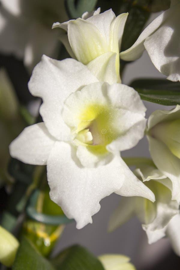 Белый цветок в утре стоковые фотографии rf