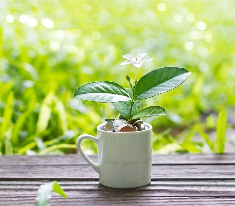 Белый цветок и зеленое растение растя из монеток в белизне на природе стоковая фотография