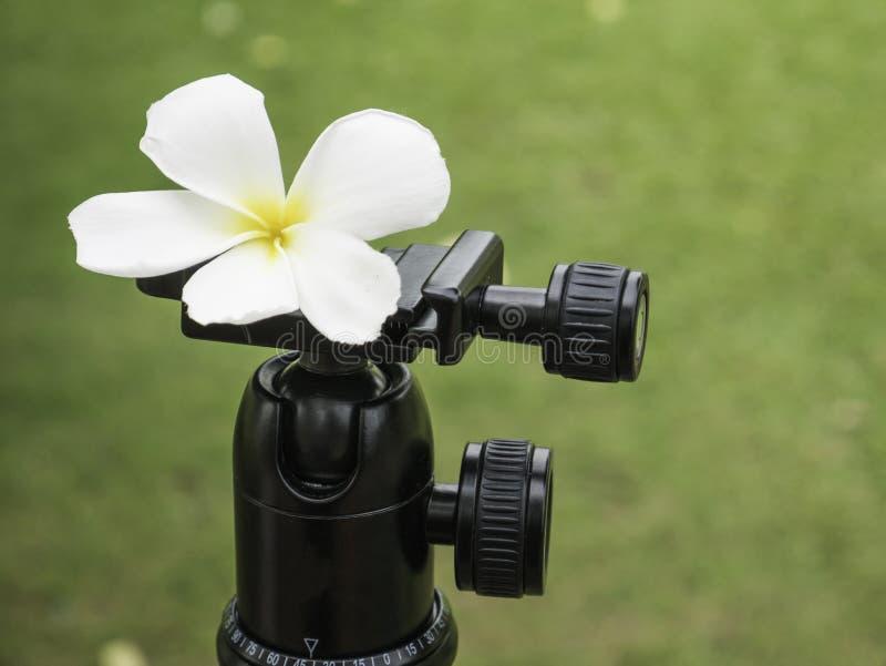 Download Белый цветок и тренога шарика Стоковое Фото - изображение насчитывающей backhoe, ballooner: 72242396