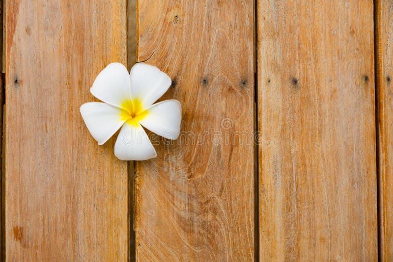 Белый цветок на деревянной предпосылке стоковые изображения rf