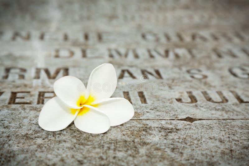 Белый цветок на надгробных плитах в старом кладбище стоковое фото