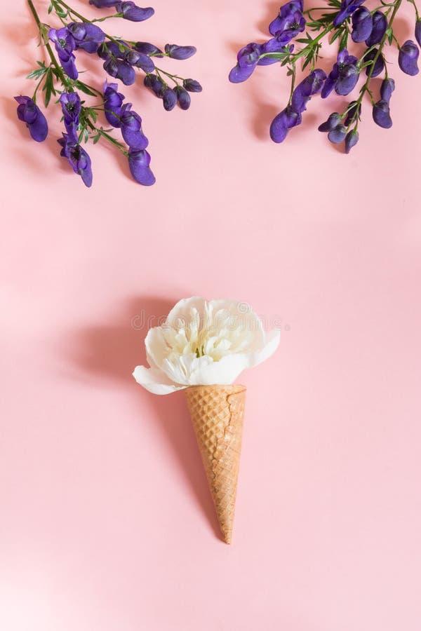 Белый цветок пиона в конусе waffle на розовой предпосылке и фиолетовом аконите лето seashells песка рамки принципиальной схемы пр стоковые изображения