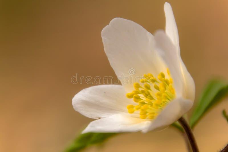Белый цветок под деревянными деревьями стоковая фотография rf