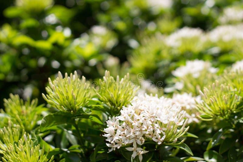 Белый цветок штыря стоковая фотография rf