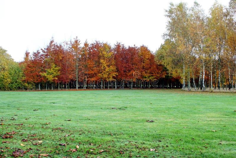 Бельгия, Bastogne, парк мира Яркая оранжевая осень стоковое изображение