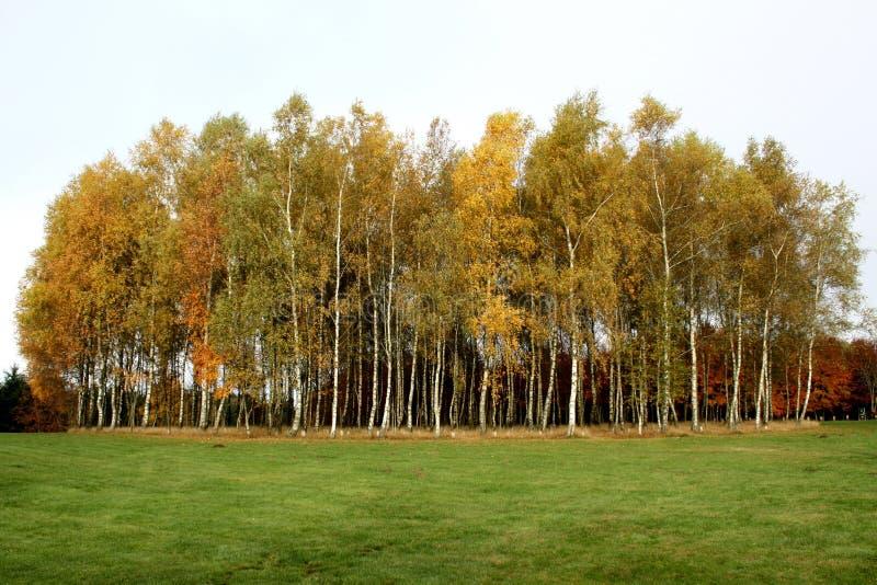 Бельгия, Bastogne, парк мира Яркая оранжевая осень стоковые фото