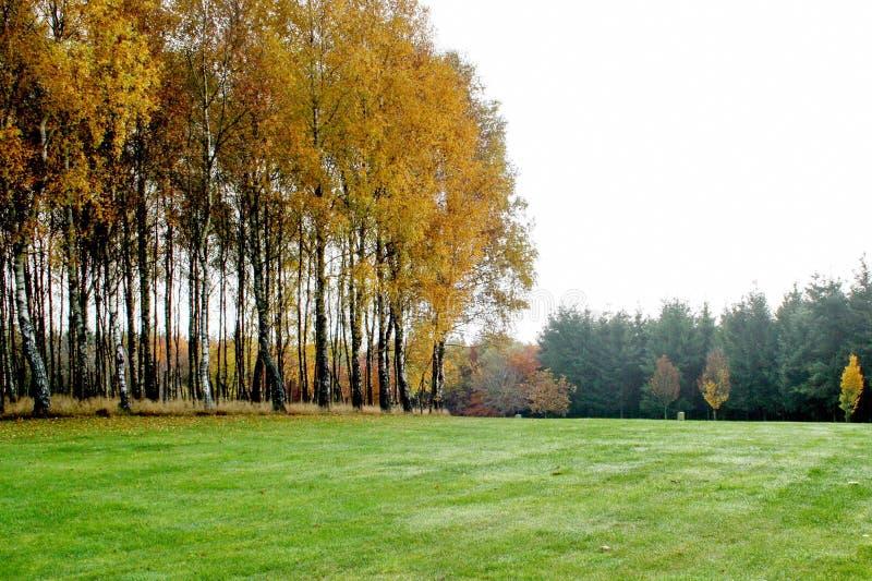 Бельгия, Bastogne, парк мира Яркая оранжевая осень стоковые изображения