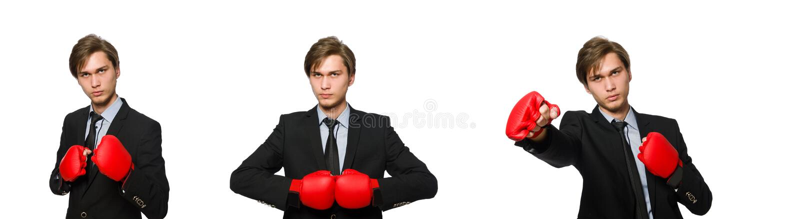 Бизнесмен боксера изолированный на белизне стоковые фото